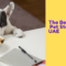 The Best Online Pet Stores in the UAE